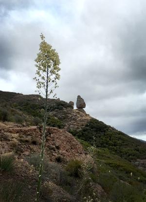 Balanced Rock and Yucca